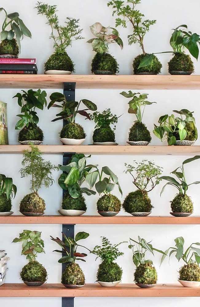 Uma coleção de kokedamas maravilhosa na estante de casa, pensou fazer algo do tipo?