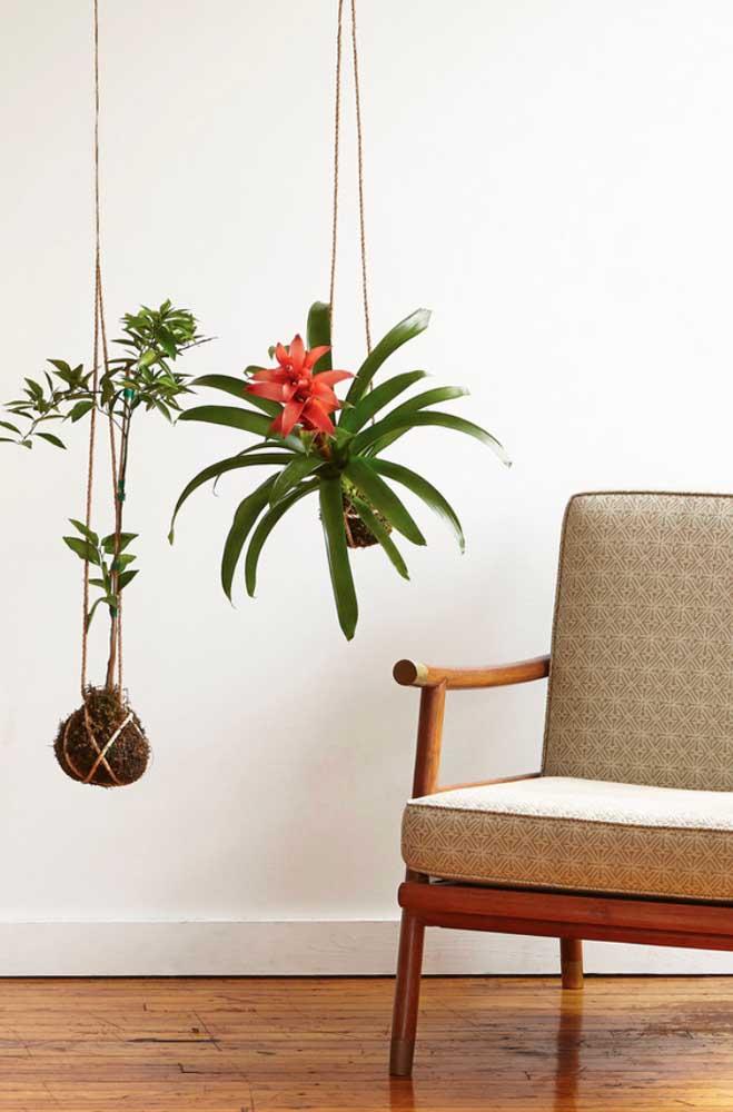 Dupla de kokedamas na sala de estar, com destaque especial para a belíssima bromélia utilizada no arranjo