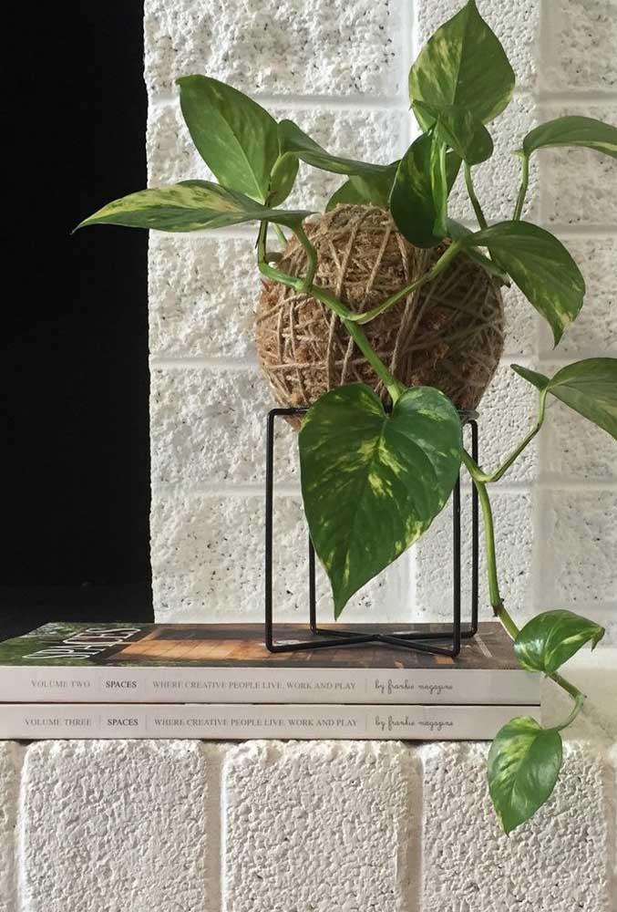 A jiboia é uma ótima opção de planta para kokedamas
