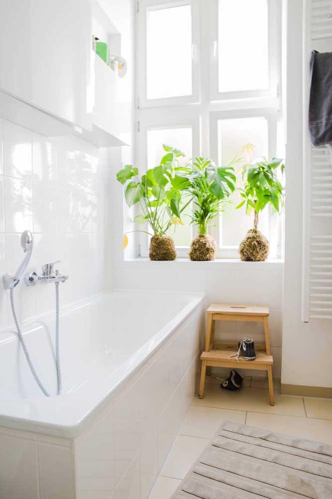 Cada planta usada na kokedama exige um grau diferenciado de iluminação, por isso, coloque-as em lugares que atendam essa necessidade