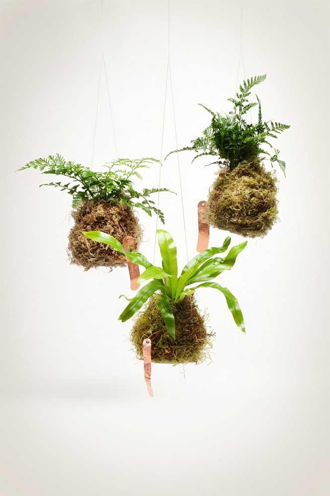 Como as kokedamas geralmente são usadas dentro de casa, as folhagens acabam sendo as plantas que melhor se adaptam ao arranjo