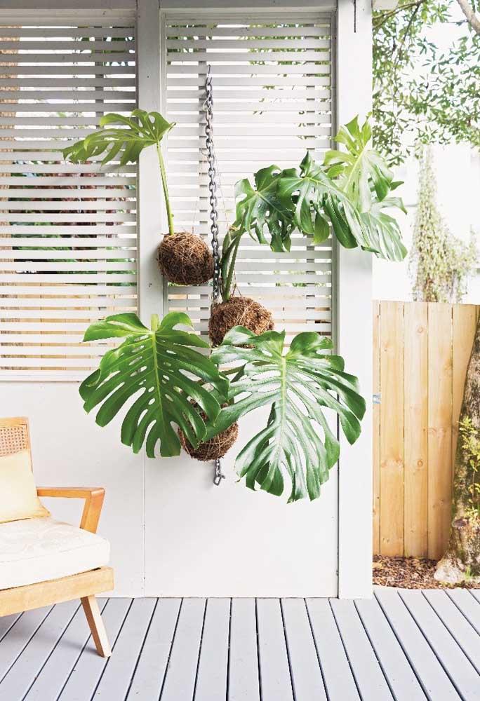 Na varanda da casa, as kokedamas de costela de adão se divertem com tanta luz