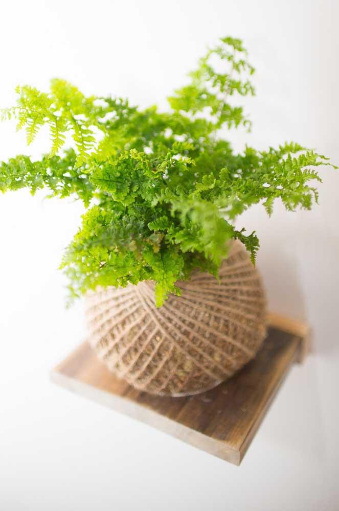 Kokedamas também são sinônimo de frescor e delicadeza