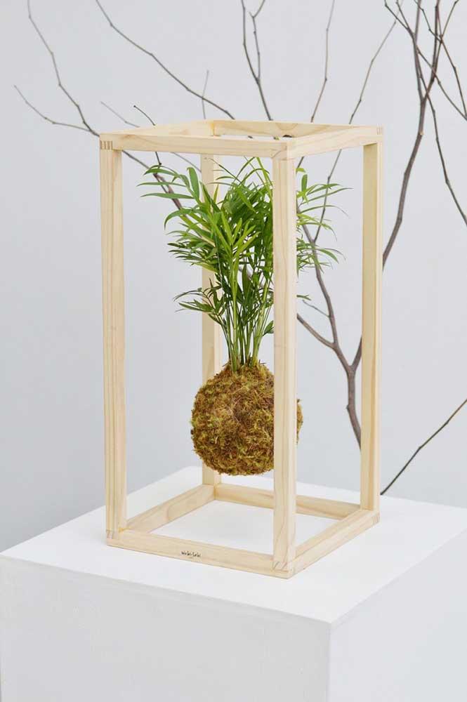 Kokedama de palmeira: uma proposta encantadora