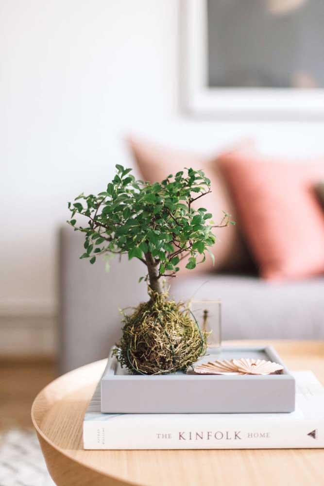 Duas técnicas japonesas em um mesmo arranjo: kokedama e bonsai