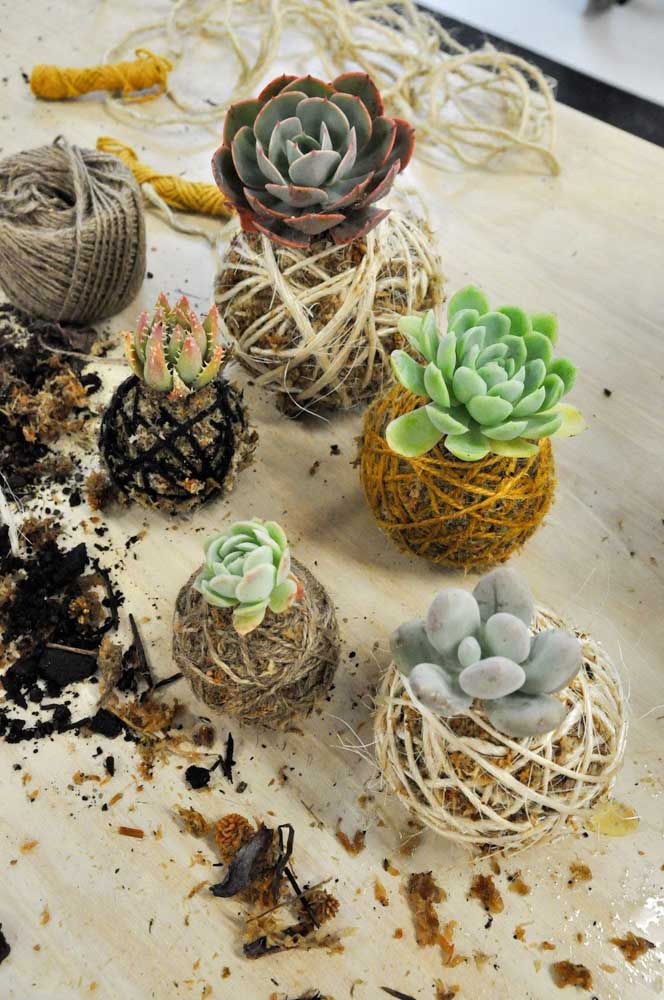 Kokedama de suculentas: um jeito diferente de apresentar as plantinhas preferidas da decoração de interiores