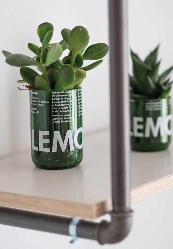 Garrafas podem se tornar lindos vasinhos para suas plantinhas