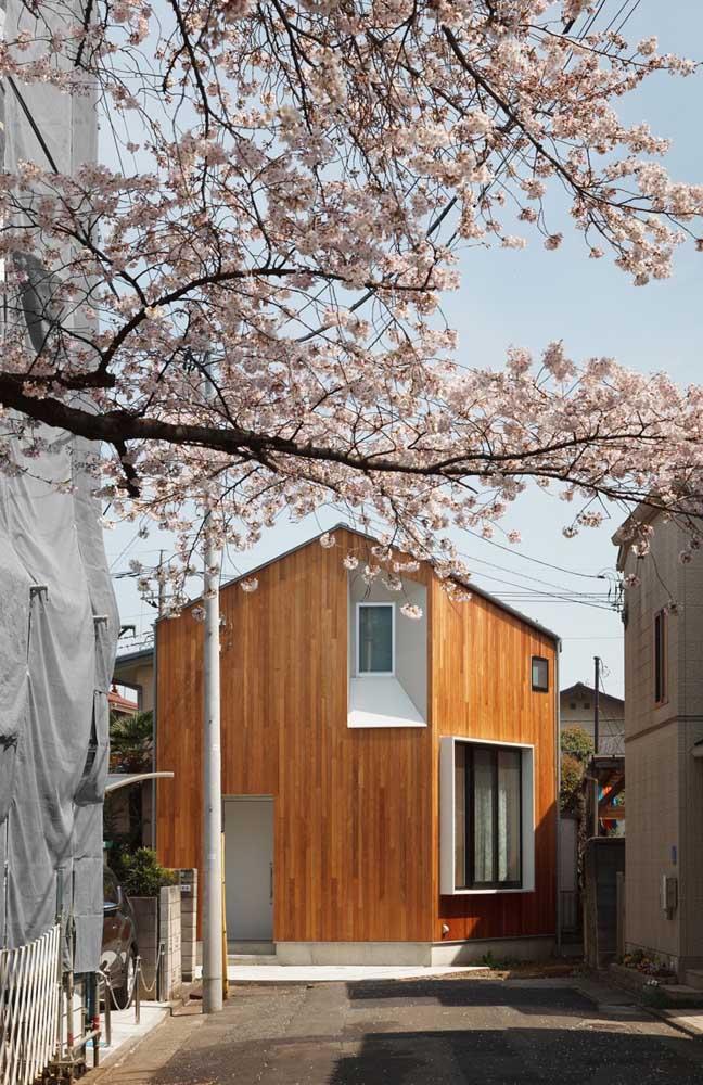 Uma cerejeira para cobrir a rua de beleza