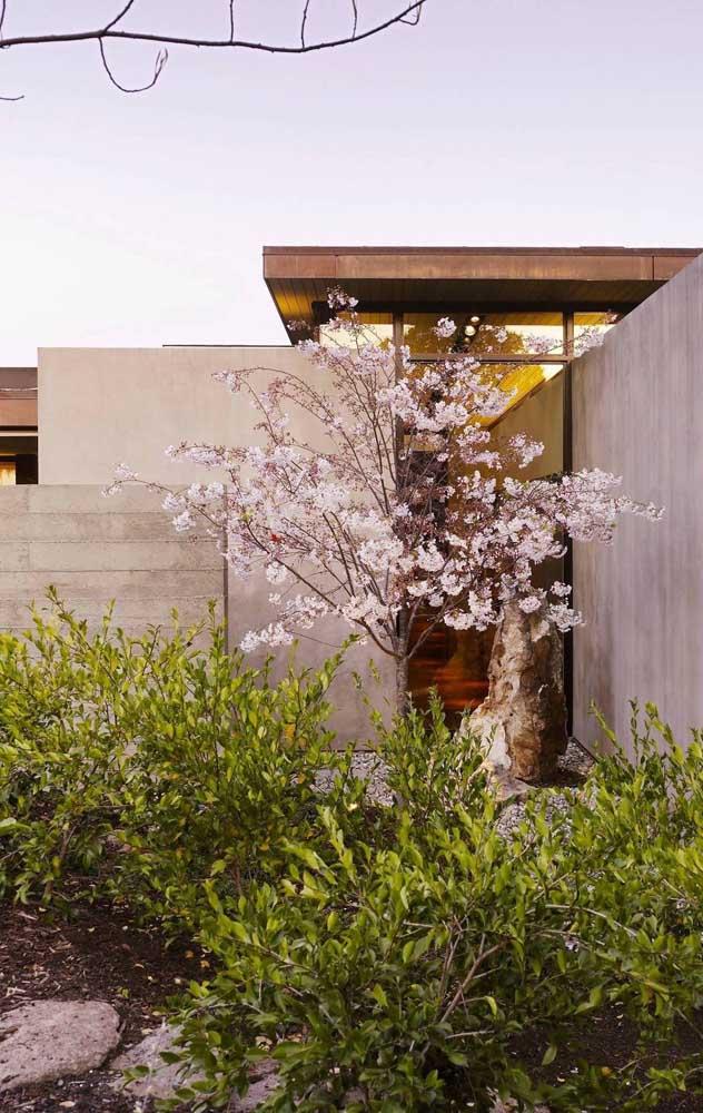 Flores de cerejeira adornam a entrada dessa outra casa