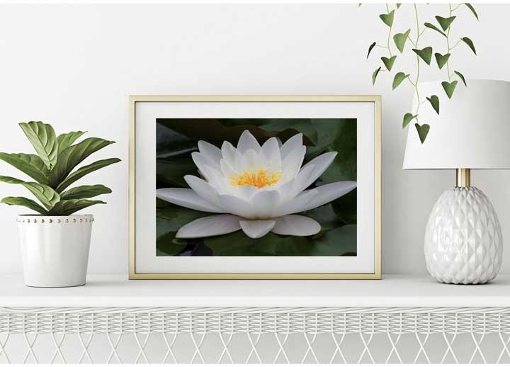 Flor de lótus: curiosidades, significados e fotos de decoração