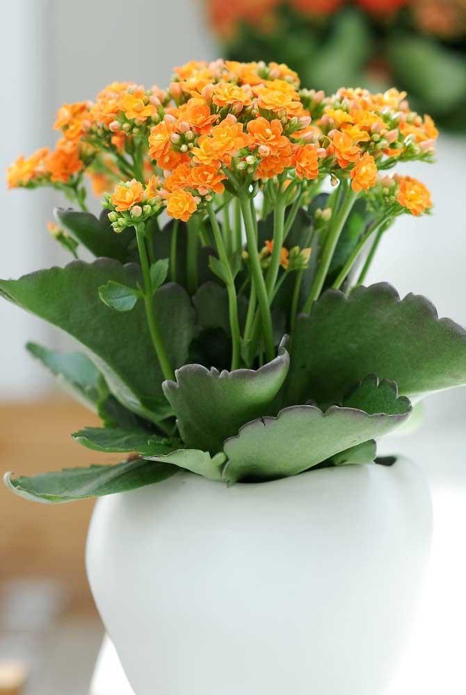 Kalanchoe laranja no vasinho branco; não é preciso muito para usar a plantinha na decoração