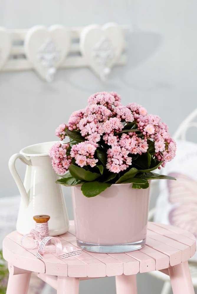 Linda kalanchoe em plena floração; o tom rosa das flores confere um ar romântico e delicado ao ambiente