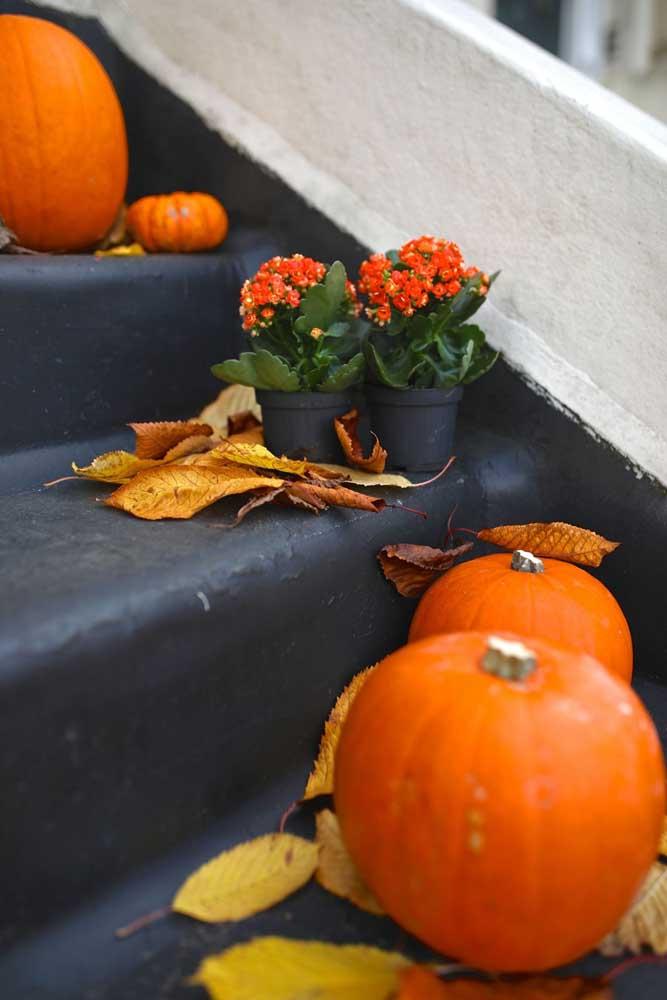 Kalanchoes laranjas para compor a decoração de halloween