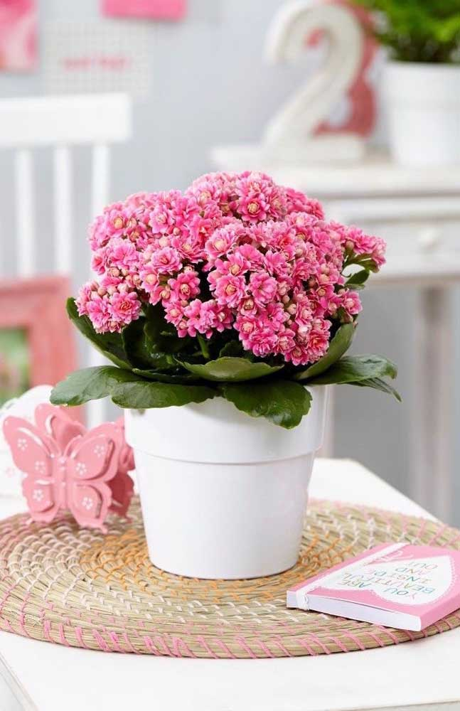 O formato de buquê deixa as pequenas flores da kalanchoe ainda mais bonitas