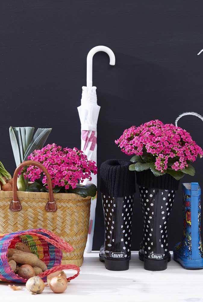 O tom de rosa das kalanchoes se destaca frente ao cenário de cores escuras