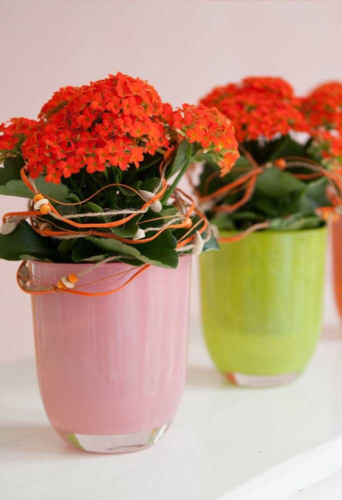 Para cada kalanchoe laranja, um vaso de cor diferente