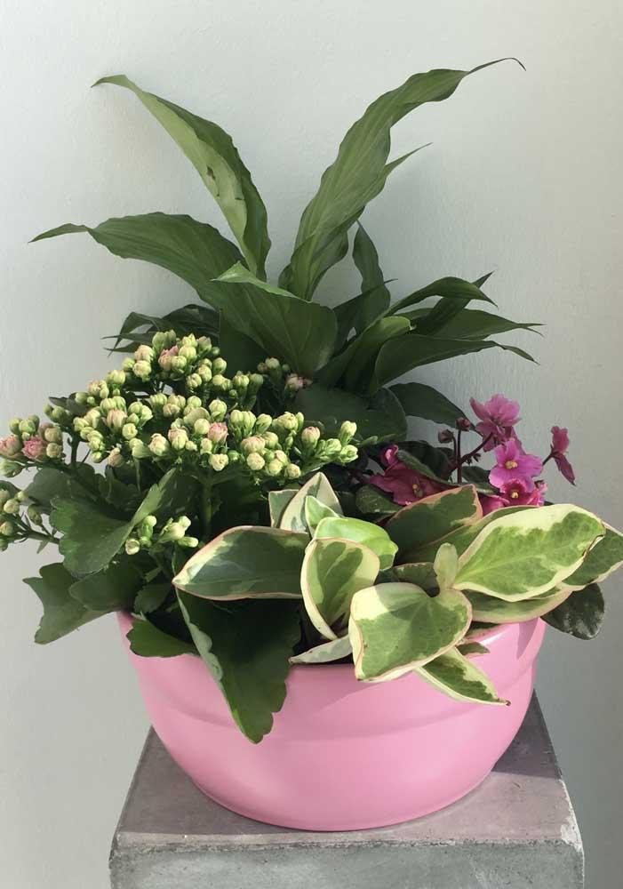 Vaso com mix de plantas, entre elas a kalanchoe
