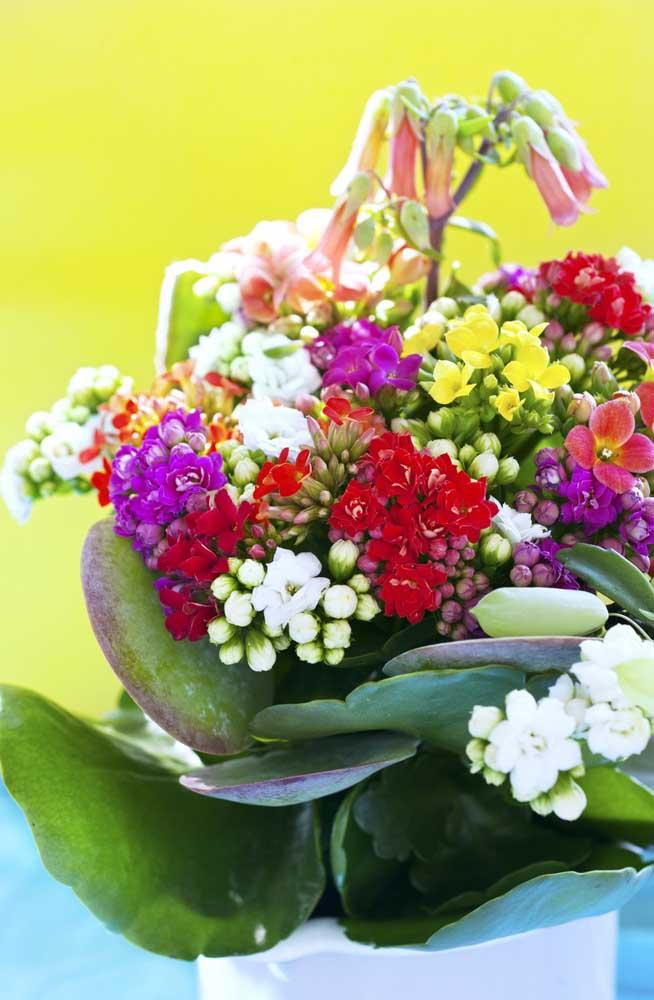 Mix de cores com as kalanchoes; um mimo de flor para alegrar a casa