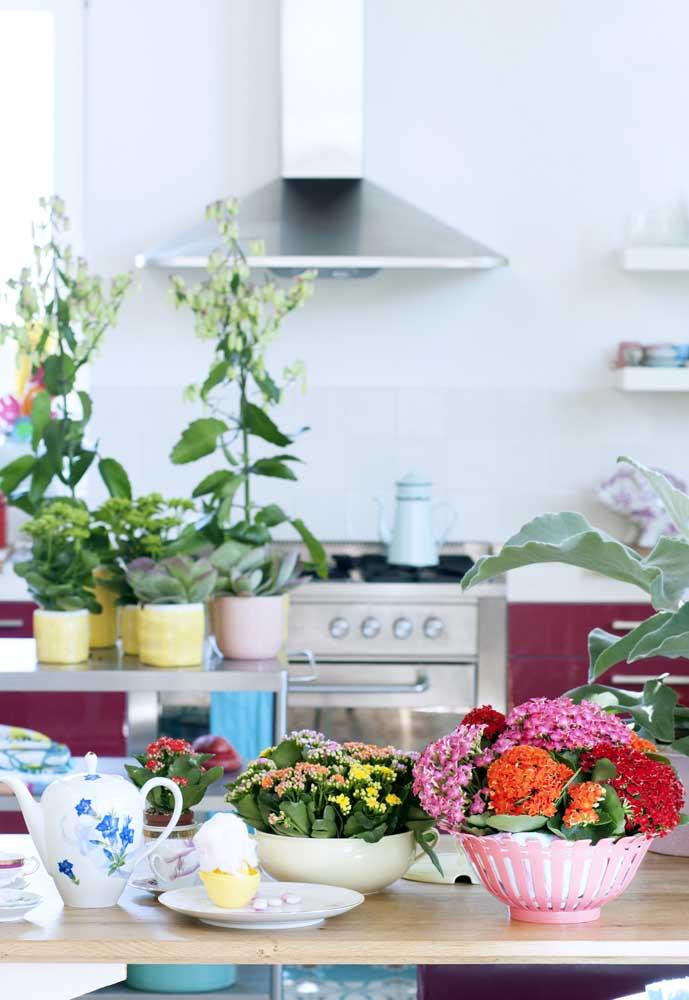 Cozinha decorada com kalanchoes de todas as cores