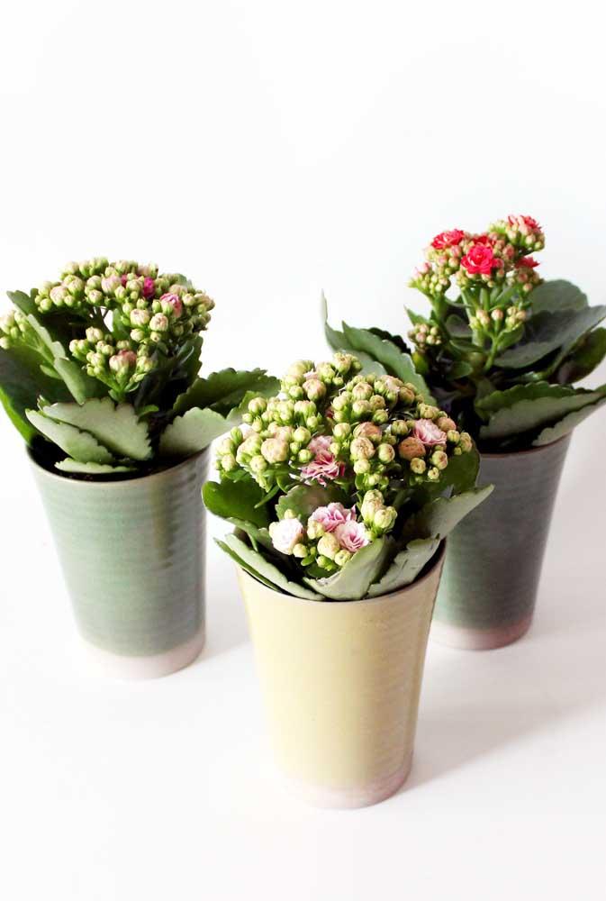 Que tal vasinhos de lata para as kalanchoes? Pratique sustentabilidade ao mesmo tempo em que cultiva suas plantinhas