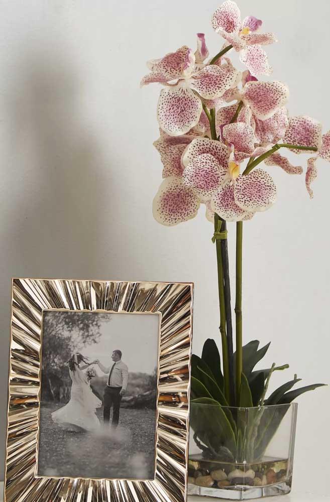 De fácil cultivo, a orquídea Vanda pode se tornar a estrela da decoração da sua casa