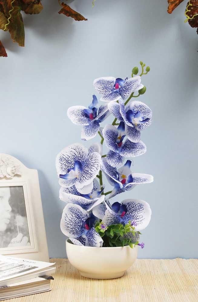 Perfeição da natureza em flores