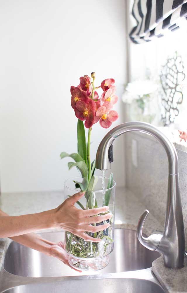 Cuide da umidade da orquídea Vanda, isso quer dizer, nem de mais, nem de menos