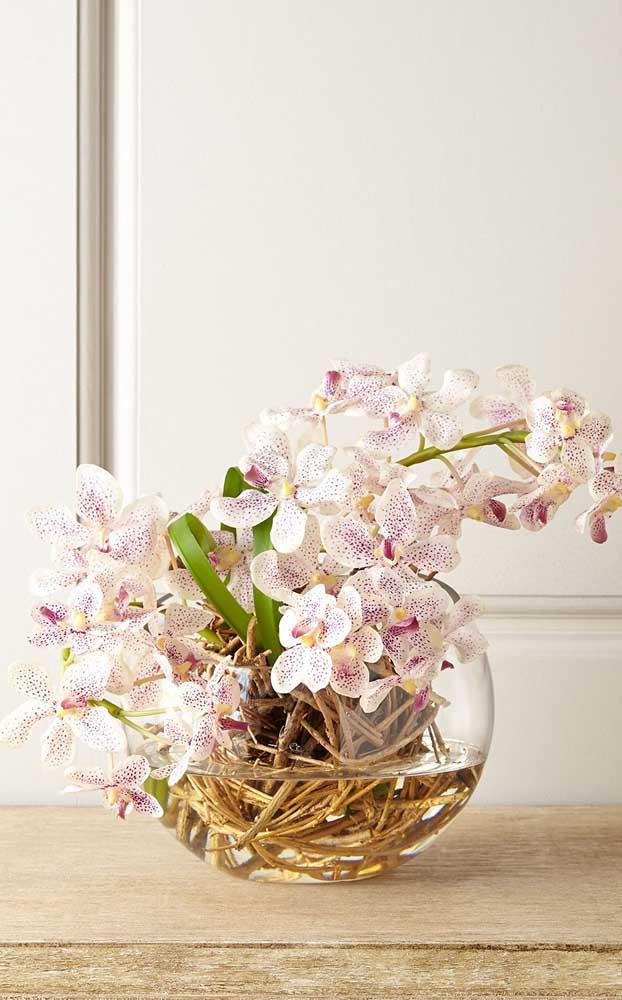 A luminosidade é tão importante quanto a rega para as orquídeas Vanda
