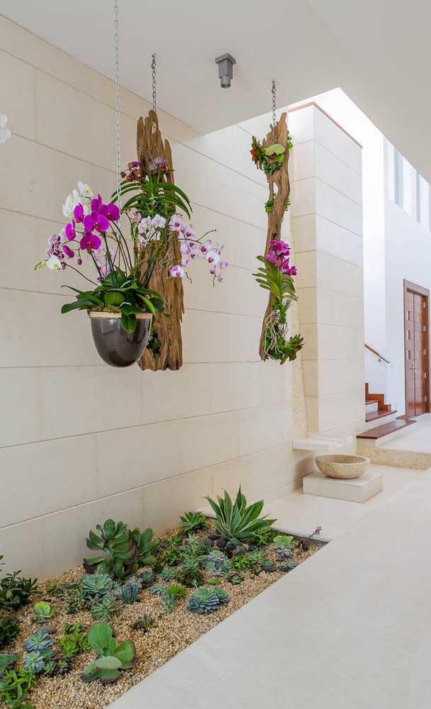 Orquídeas Vanda suspensas decorando o jardim que dá acesso a casa