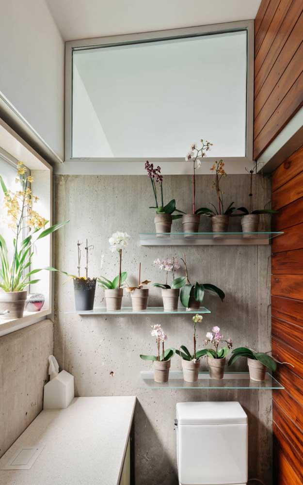 Esse lavabo super iluminado se tornou o refúgio perfeito para as diferentes orquídeas Vanda