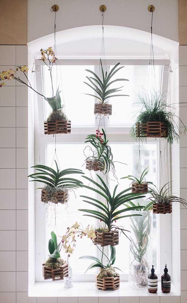 Jardim vertical de orquídeas Vanda na janela; para cair de amores!