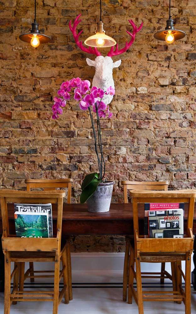 Orquídeas Vanda cor de rosa: uma das mais comuns encontradas por aí