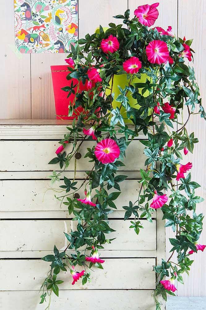 As petúnias são uma ótima opção para quem procura por um tipo de planta suspensa