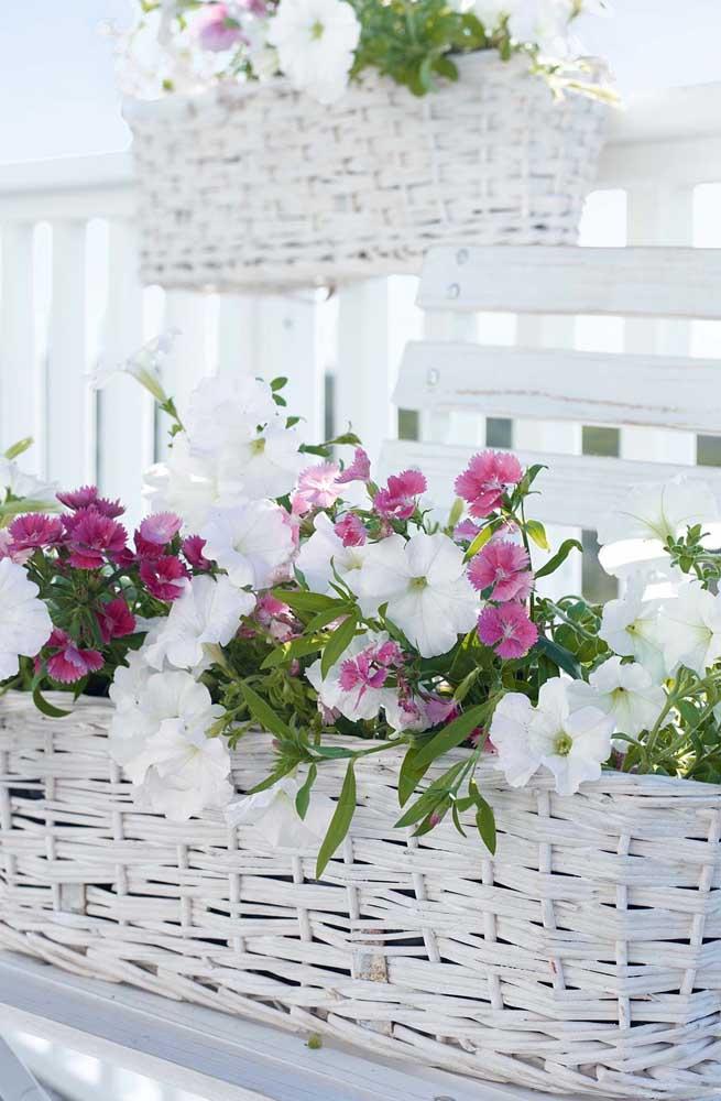 Nessa delicada floreira crescem petúnias e cravos plantados de forma intercalada