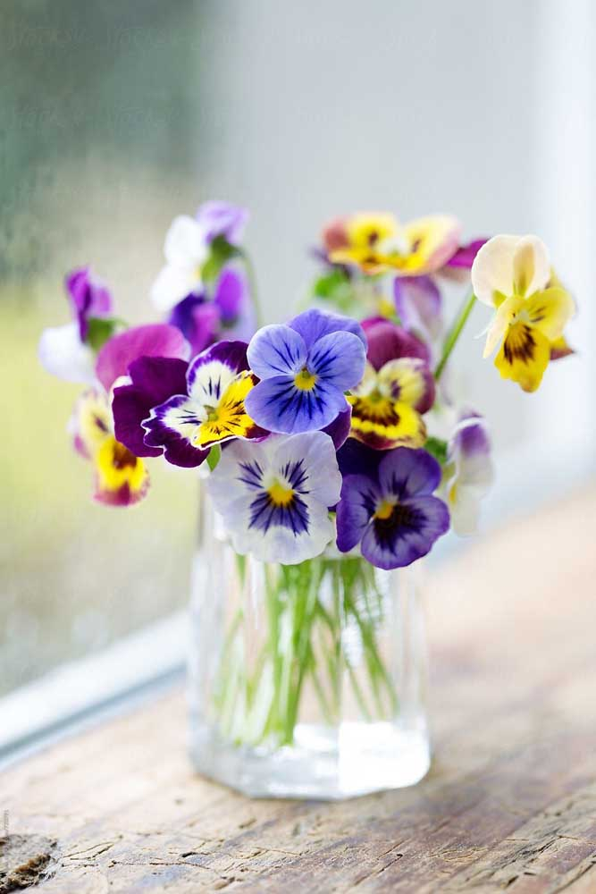 Arranjo delicado com petúnias de cores variadas, formando um verdadeiro arco íris no vaso