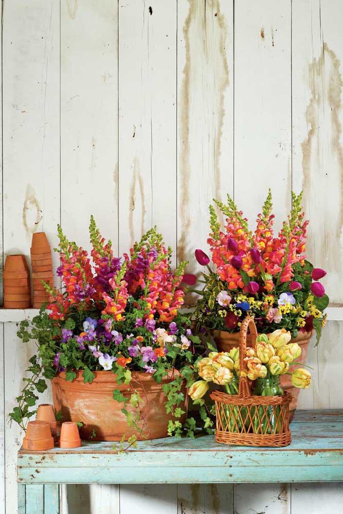 Que linda composição de flores por aqui: petúnias, tulipas, amor perfeito, entre outras