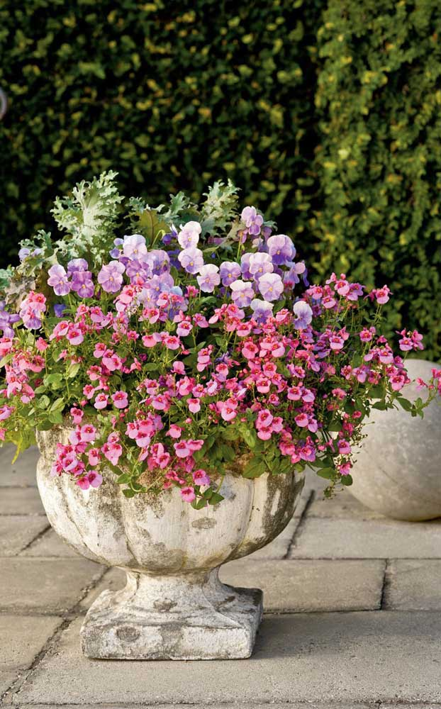 Dois tipos de petúnias plantadas no mesmo vaso decoram essa área externa