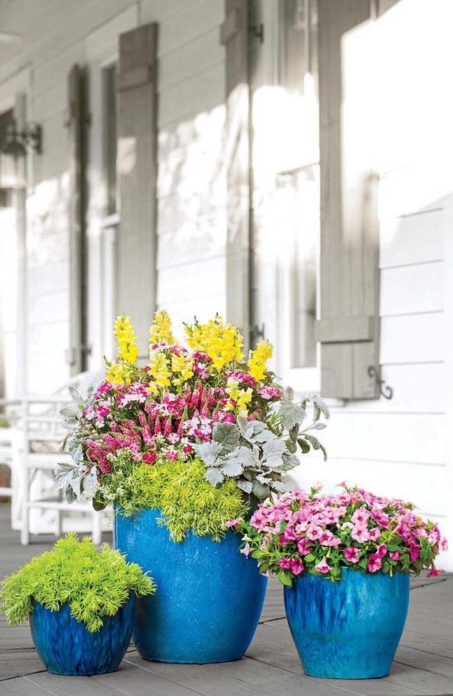 Vaso azul para destacar o tom rosa das flores da petúnia