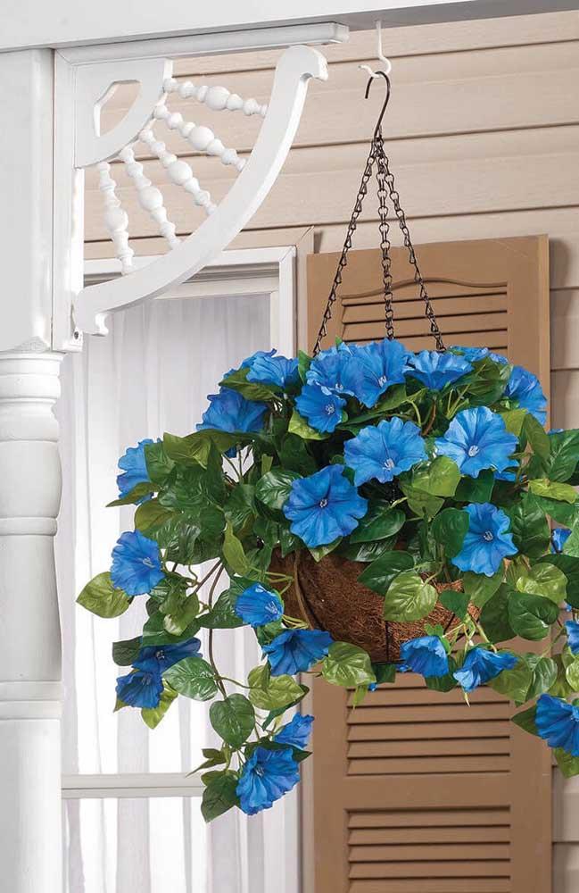 E o que acha das excêntricas petúnias azuis? Você pode formar um belo vaso suspenso com elas