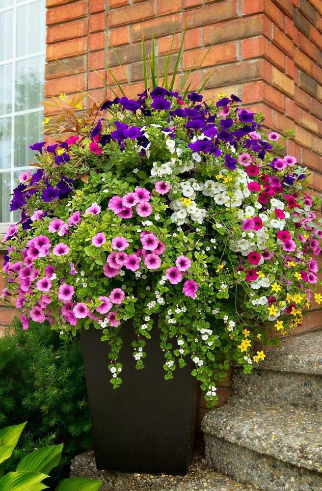 O vaso grande na entrada da casa comporta uma grande variedade de cores diferentes de petúnias
