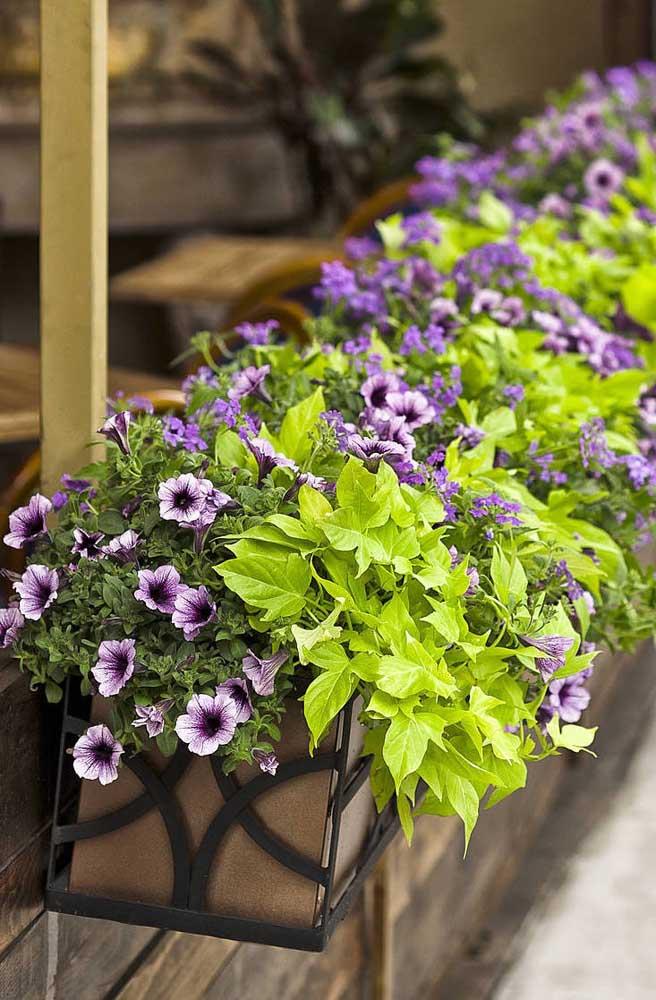 Jardineiras forradas de petúnias lilás