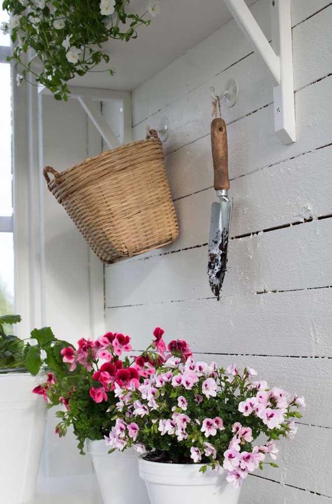 Jardim florido na parede com petúnias de cores variadas