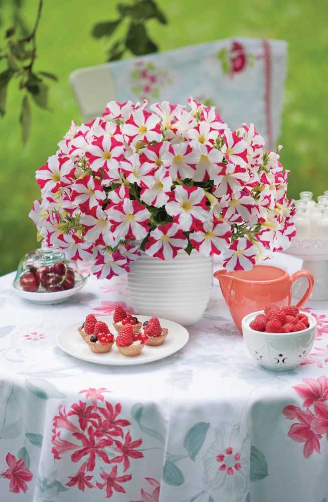 Que lindo vaso de petúnia mesclada; repare, inclusive, que as cores das flores combinam com a toalha da mesa