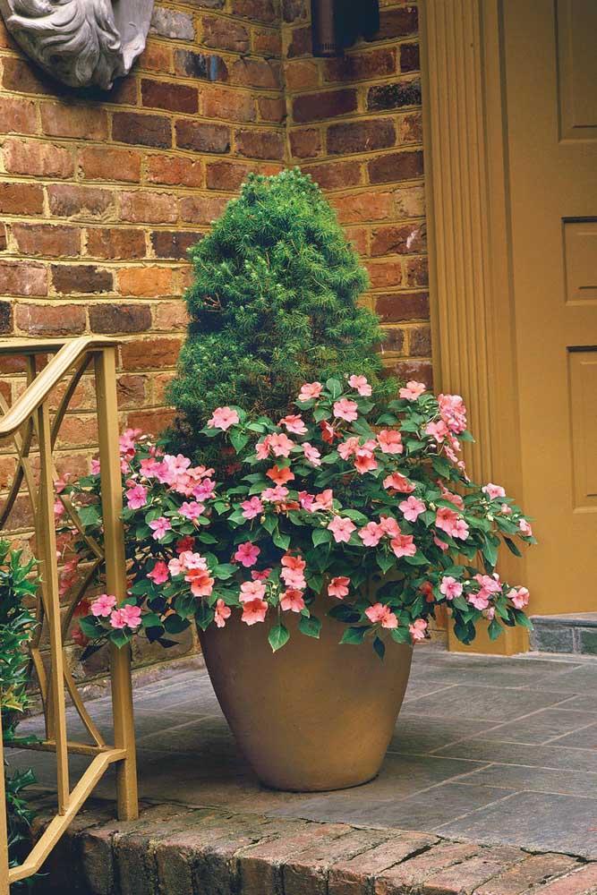 Petúnias e um pinheiro: combinação inusitada e super bonita para entrada da casa
