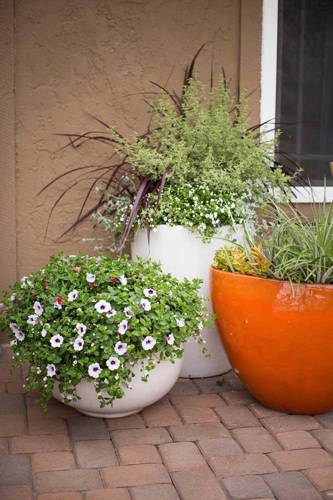 Modo clássico de cultivar as petúnias: em um vaso grande no chão