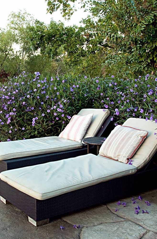 Aqui nessa área externa, as flores de petúnia abraçam as espreguiçadeiras oferecendo um belíssimo cenário