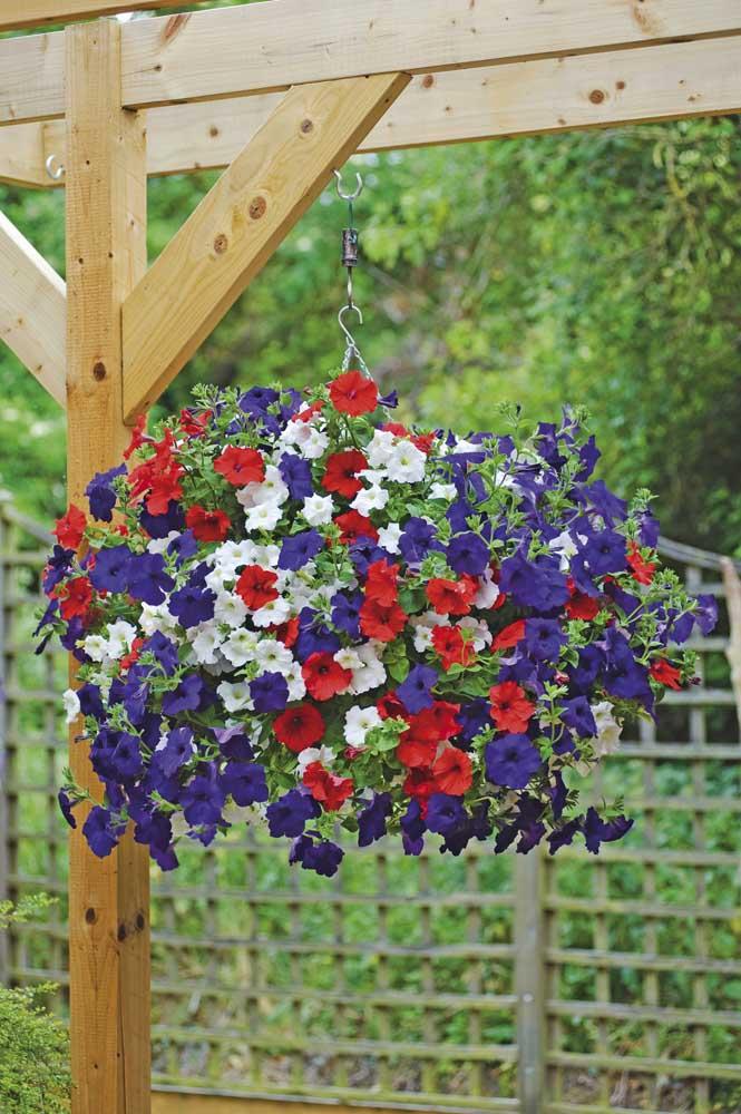 Experimente colocar um vaso bem colorido de petúnias na sua varanda ou no seu pergolado, o efeito visual será incrível