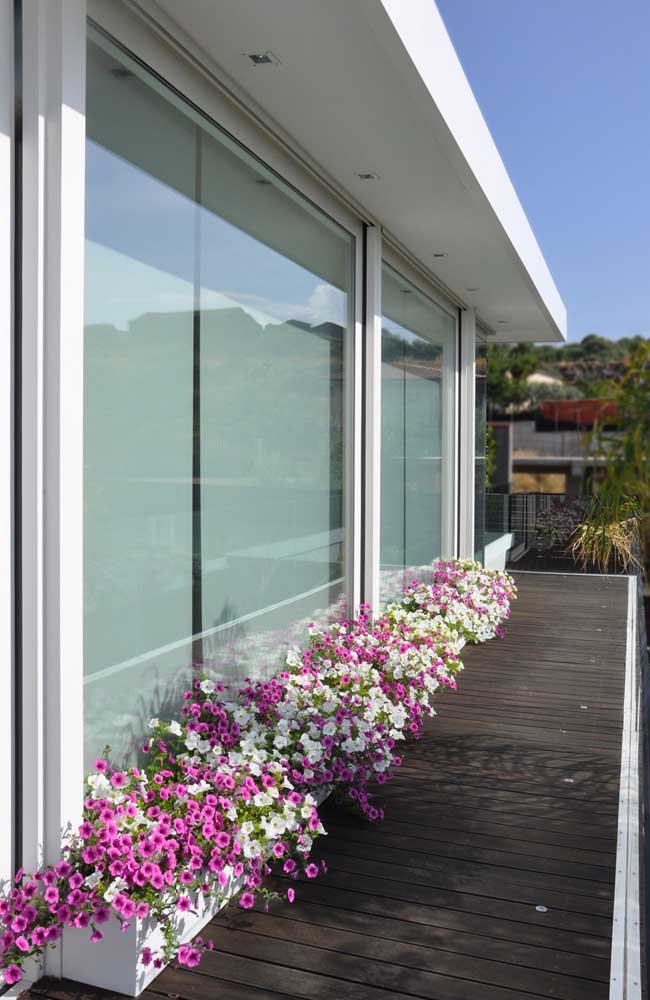 A casa moderna ganhou um novo fôlego com o canteiro de petúnias rosas e brancas