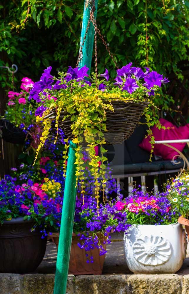 As petúnias são flores fáceis de cuidar, basta apenas oferecer as condições adequadas de luz e água