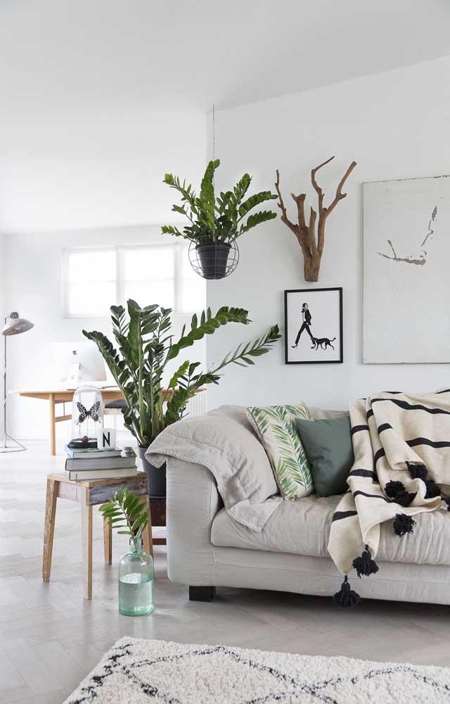 Linda inspiração de sala de estar de apartamento decorada com vasos de tamanhos variados de zamioculcas